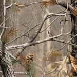 Realtree Picture