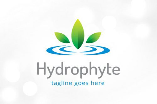 Hydrophyte Water Plant Logo Templates Creative