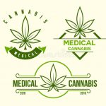 Set Green Medical Cannabis Emblem Logo Classic Vintage Style Vector